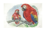Scarlet Macaw Ara Macao with Chick, Illustration Poster