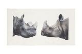 Rhinoceros Heads, Black Rhinoceros (Diceros Bicornis) and Rhinoceros (Genus), Illustration Sztuka