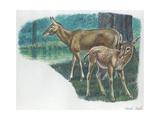 Pere David's Deer Elaphurus Davidianus with Young, Illustration Posters