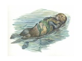 Sea Otter Enhydra Lutris Sleeping in Water, Illustration Prints