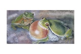 European Tree Frog (Hyla Arborea), Illustration Posters