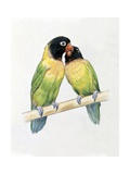 Close-Up of a Pair of Masked Lovebirds Perching on a Branch Print