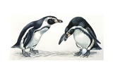 Birds: Sphenisciformes, Humboldt Penguin (Spheniscus Humboldti) Couple, Illustration Posters