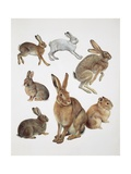 Close-Up of Group of Leporidae Mammals Poster
