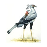 Birds: Secretary Bird with Northern Carmine Bee-Eater Poster