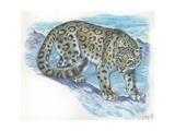 Snow Leopard Panthera Uncia, Illustration Art