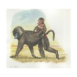 Yellow Baboon Papio Cynocephalus Carrying Infant on Back, Illustration Art