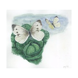 Large Whites or Cabbage Butterflies Pieris Brassicae, Illustration Prints