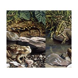 Two Frogs and Salamander by Water, Illustration Prints