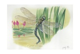Dragonfly, Illustration Posters