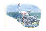American Flamingo Phoenicopterus Ruber with Young, Illustration Poster