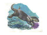 Sea Otter Enhydra Lutris Holding Sea Urchin Underwater, Illustration Print