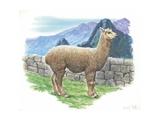 Alpaca Vicugna Pacos, Illustration Plakater