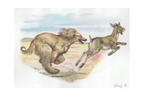 Afghan Hound Canis Lupus Familiaris Chasing Goat, Illustration Prints