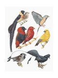 Close-Up of a Group of Birds Art