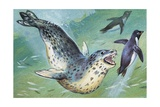 Close-Up of a Leopard Seal Hunting a Penguin (Hydrurga Leptonyx) Posters