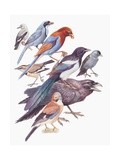Close-Up of a Group of Birds Prints
