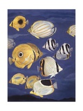 Zoology: Fishes: Butterflyfish (Chaetodontidae), Different Species, Illustration Posters