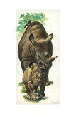 White Rhinoceros Ceratotherium Simum with a Young, Illustration Plakater
