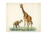 Giraffe and Calf Giraffa Camelopardalis, Illustration Art
