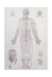 Acupuncture Meridian Chart Giclee Print