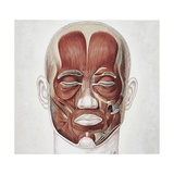 Illustration of Human Face Muscles Giclee Print