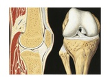 Illustration of Human Knee-Joint Giclee Print