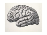 Illustration of Human Brain Giclee Print