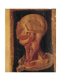 Facial Muscles by Hieronymus Fabricius Ab Aquapendente, Illustration Giclee Print