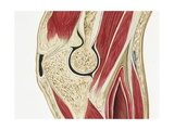 Illustration of Elbow Joint Giclee Print