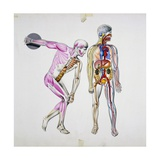 Muscles During Movement and Internal Organs, Illustration Giclee Print