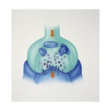 Illustration Showing Transmission of Nerve Impulse in Synapse Giclee Print