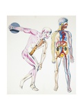 Illustration of Human Body Giclee Print