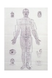 Acupuncture Meridian Chart Giclée-Druck