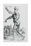 Anatomic Drawing from De Humani Corporis Fabrica Libri Septem by Andreas Vesalius, 1543 Giclee Print