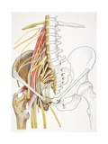 Illustration of Lumbago, Lumbar and Pelvic Regions Giclee Print