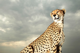 A Cheetah Searching for Prey From Atop a Four-wheel-drive Vehicle Photographic Print by Joe Petersburger
