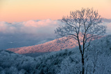 Sunrise Casts a Pink Hue on Rime Ice in the Blue Ridge Mountains Photographic Print by Amy & Al White & Petteway