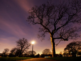 Nightime in Hyde Park, London Photographic Print by Alex Saberi