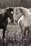 Horses I Posters by Sally Linden