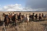 Horses Along the Highway Near Lakeside, NE Photographic Print by Joel Sartore