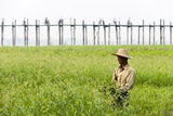 A Man Collects Grass in Front of the U Bein Bridge in Burma Photographic Print by Alex Treadway