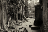 Strangler Fig Trees and Lichen Engulf Temple Ruins at Ta Prohm Temple Photographic Print by Jim Ricardson