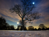 Snow Covered Trees at Night in Hyde Park, London Photographic Print by Alex Saberi