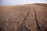 Tire Tracks Through a Field Near Lakeside, Nebraska Photographic Print by Joel Sartore