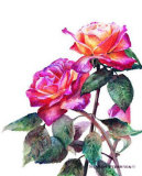 Flower Study Rose Posters by Sharon Pedersen