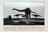 Diplodocus and Allosaurs Dinosaur Poster