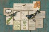 Birds of the Garden Plakater