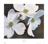 Dogwood Study Prints by Ginny Chenet