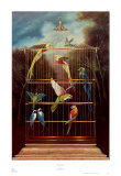 Aviary Prints by David Rollins